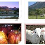 Digital Wallpaper: Scenic Montana Landscape